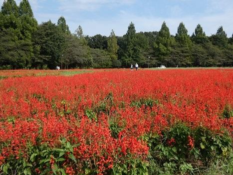 「きれぎれの風彩 花の丘農林公苑0921-1」