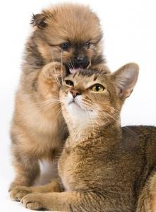 beautiful_cat_picture_1_168775.jpg