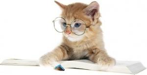 beautiful_cat_picture_6_168770.jpg