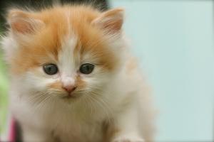 newborn_kitten_514764.jpg