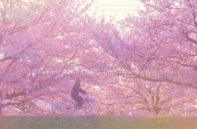 1207Blue_5D4_9523p_2004H.jpg