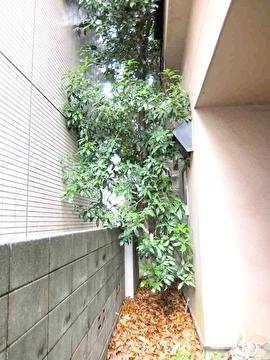 高木の様子1