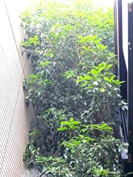 高木の様子3