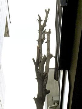 高木の枝落とし