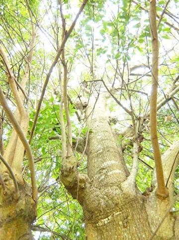枝の状態2