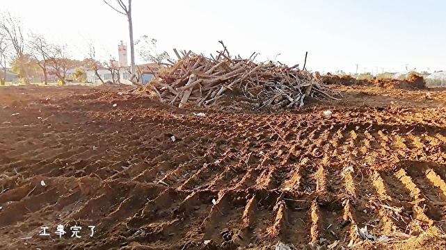 雑木林工事完了