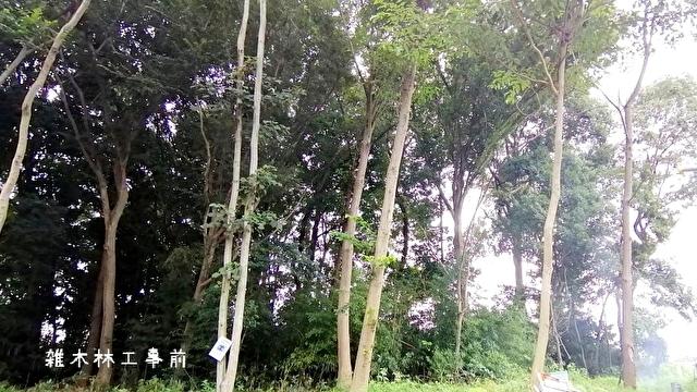 雑木林工事前