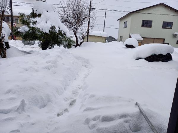 2020年12月16日の雪1