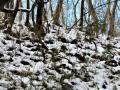 斜面の浪雪