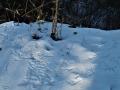 ヤマドリの足跡