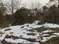 斑雪残る藪-命の営みが見えました