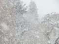 お昼の吹雪.