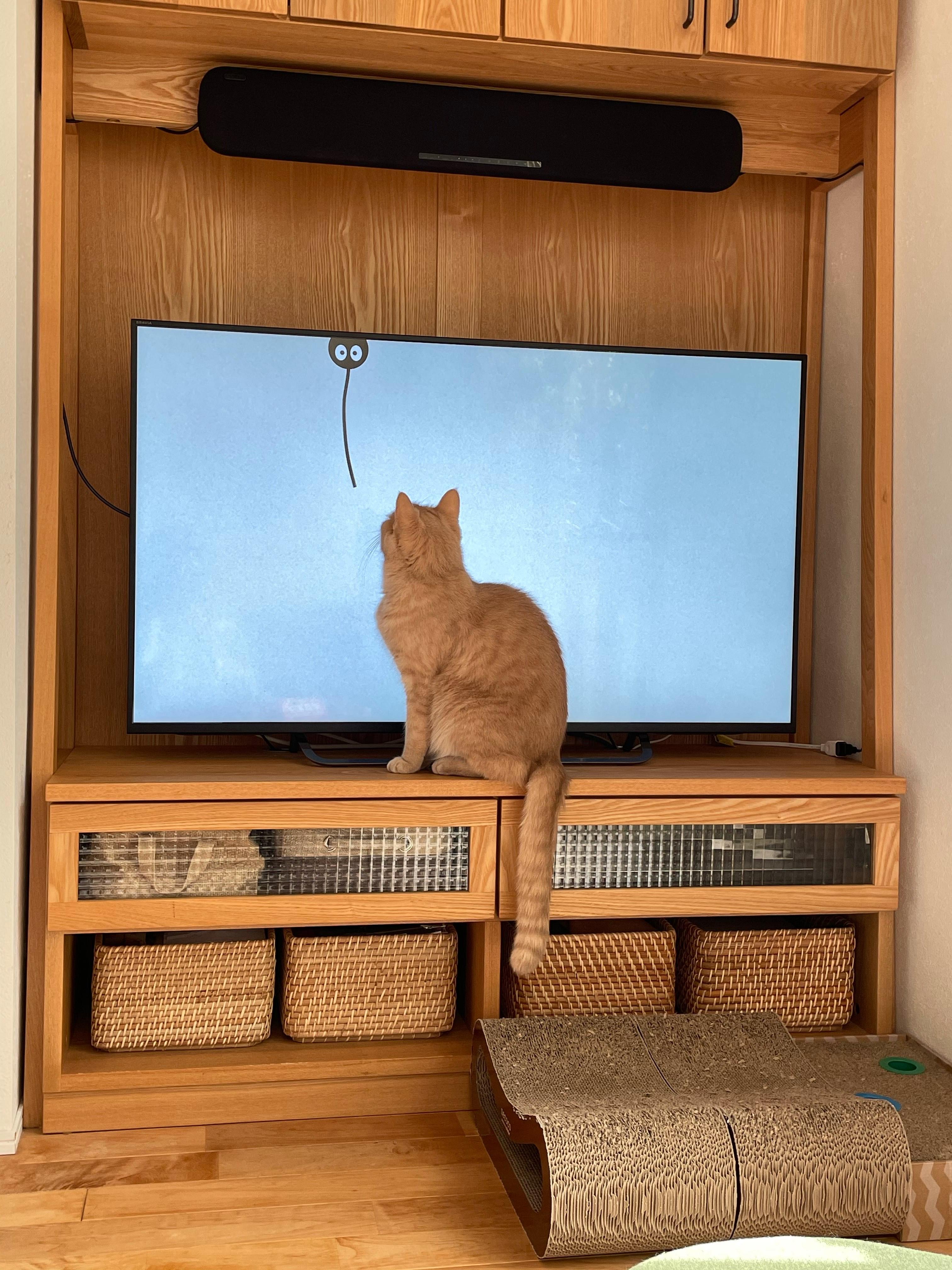 猫専用動画