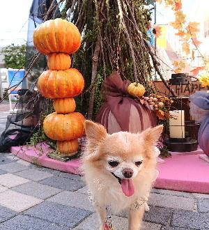 blog2020101203.jpg