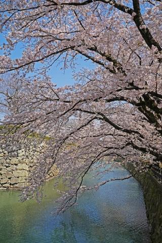 200404姫路城縦2