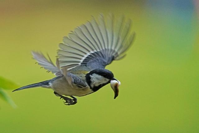 200426探鳥11