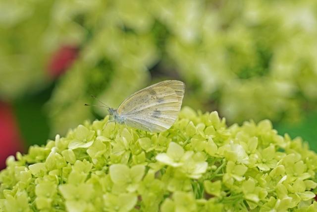 200614植物園4_1