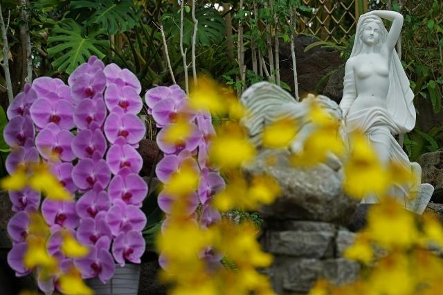 200614植物園15