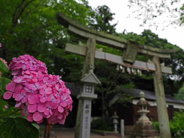200627新宮八幡神社5