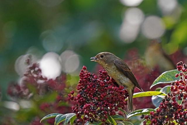 201024神戸森林公園19_1