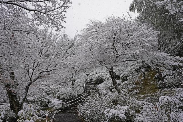 201231天龍寺1
