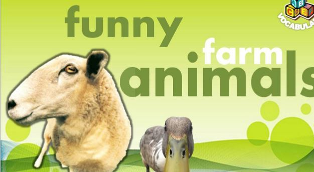 農場にいる動物の名前英語教材farm animals ppt1