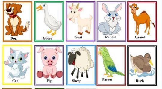 ペットの名前英単語ミニカードfarm animal minicards