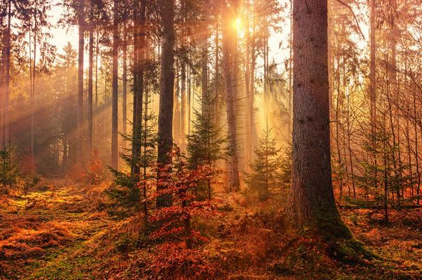 forest in autumn1