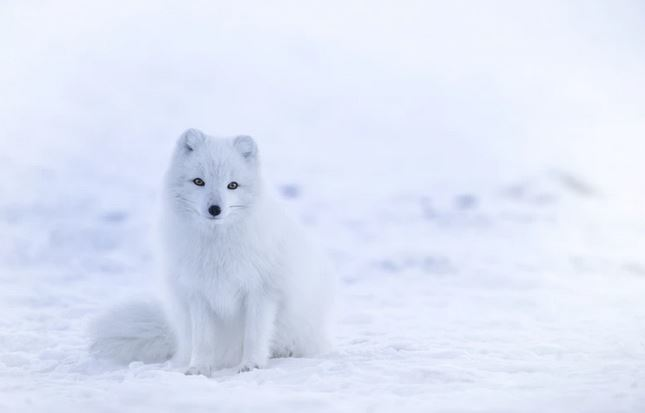 a dog in winter