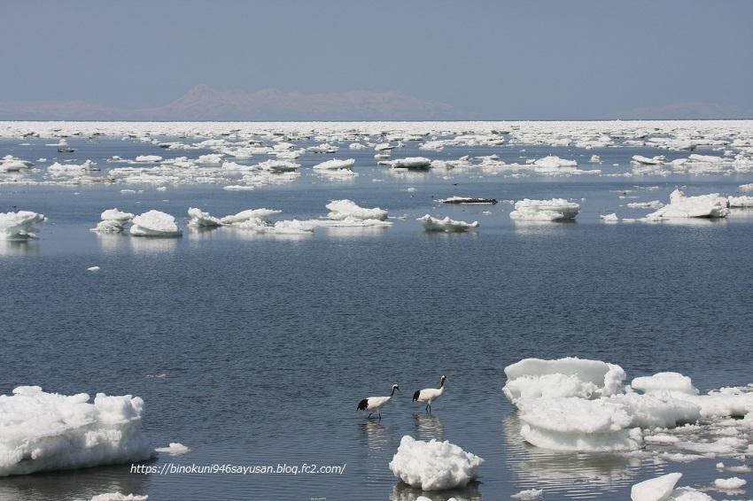 流氷の丹頂、エゾシカⅡ 038-1