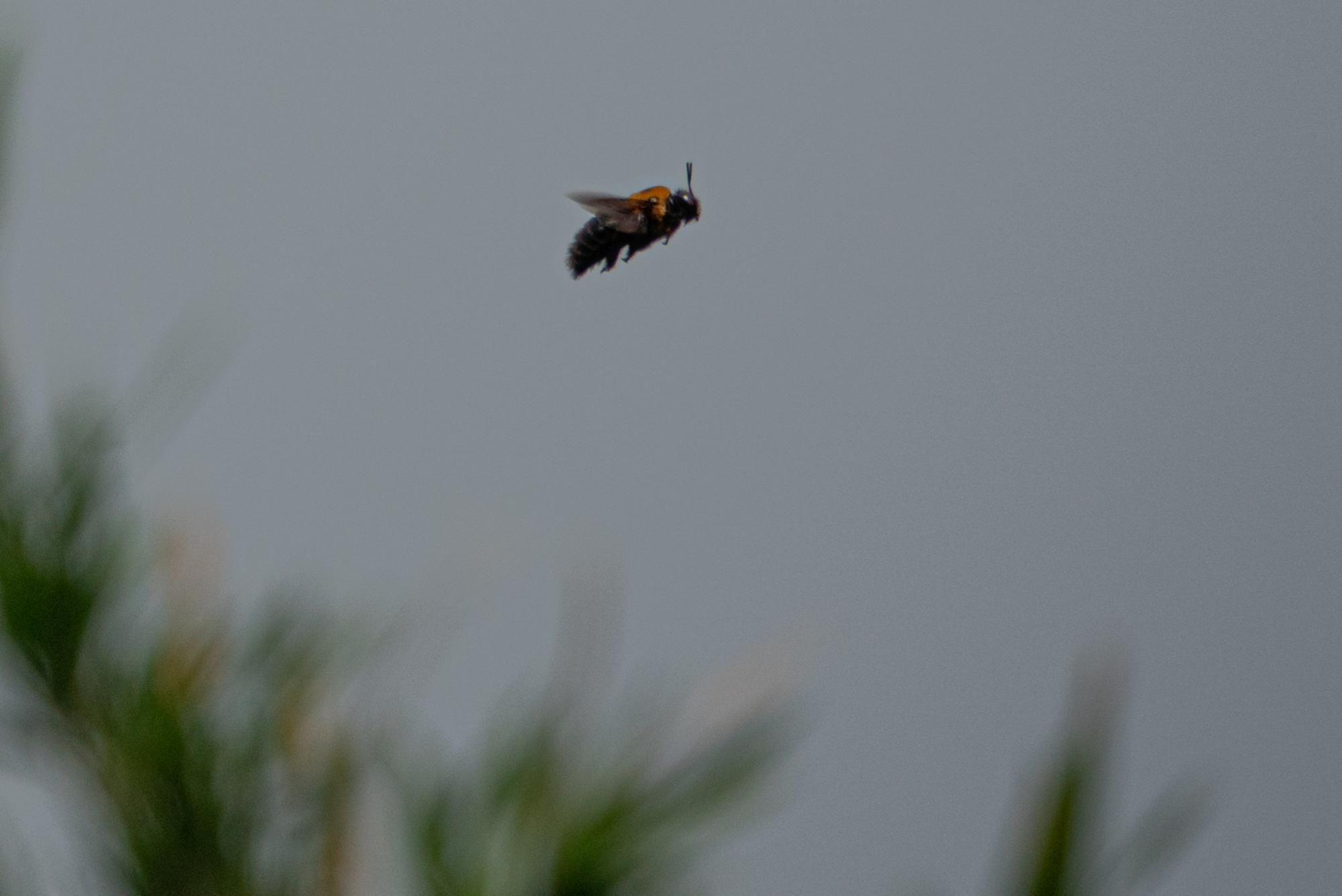 20200603-ハチ