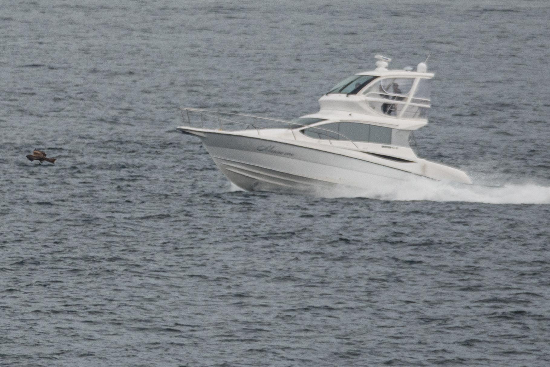 20201101-トビとボート2