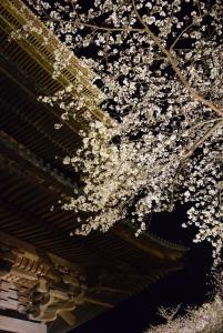 夜桜お気に入り