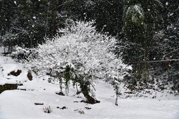 白銀の情景(1)