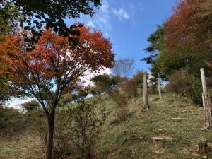 堂平山を登る
