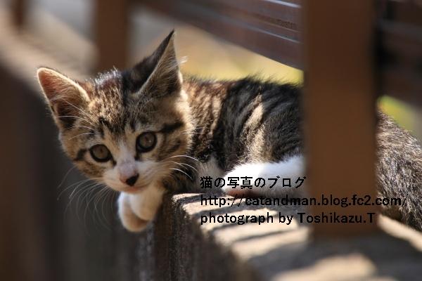 IMG_0435s.jpg