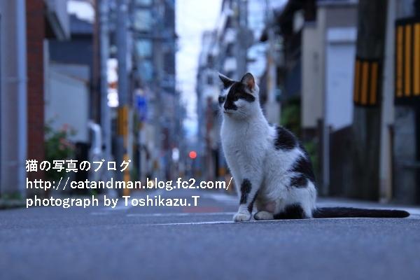 IMG_7269s.jpg