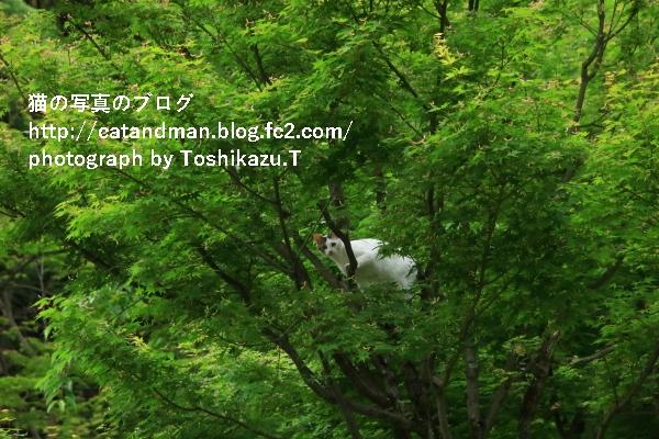 IMG_8272s.jpg