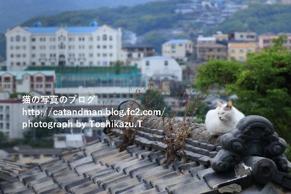 IMG_8281s.jpg