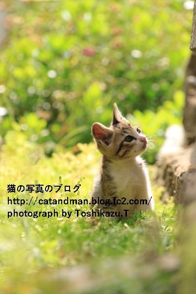 IMG_8893s_20200623190443b4e.jpg