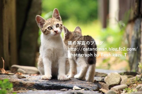IMG_9555s.jpg