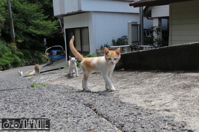 猫6,7,9