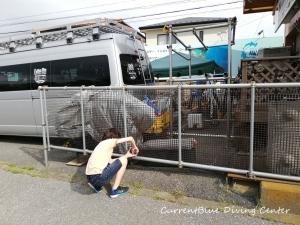 カレントブルー柵作成DIY (1)