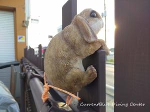 ジョイフル本田千葉ニュータウン店,木材買い出し,ガーデン,ウサギの飾り? (5)