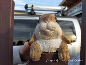 ジョイフル本田千葉ニュータウン店,木材買い出し,ガーデン,ウサギの飾り? (4)