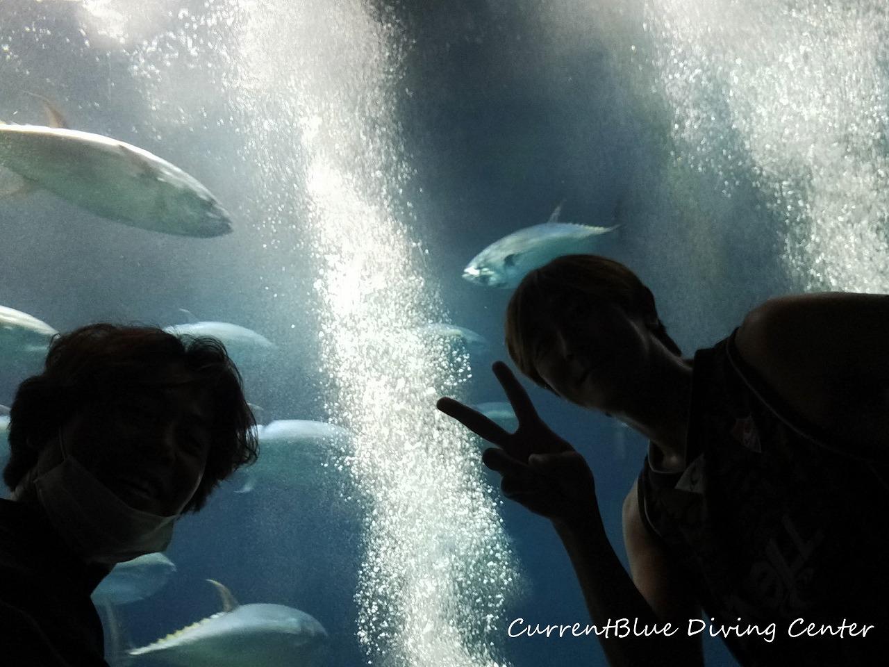 葛西臨海水族園水槽掃除,水族館メンテンナンス (2)