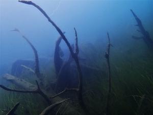 200919本栖湖ダイビング (36)