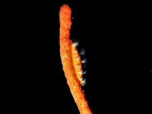 ホリキヌヅツミ (4)
