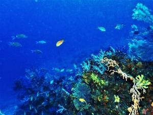 201129伊豆大島ダイビング (25)
