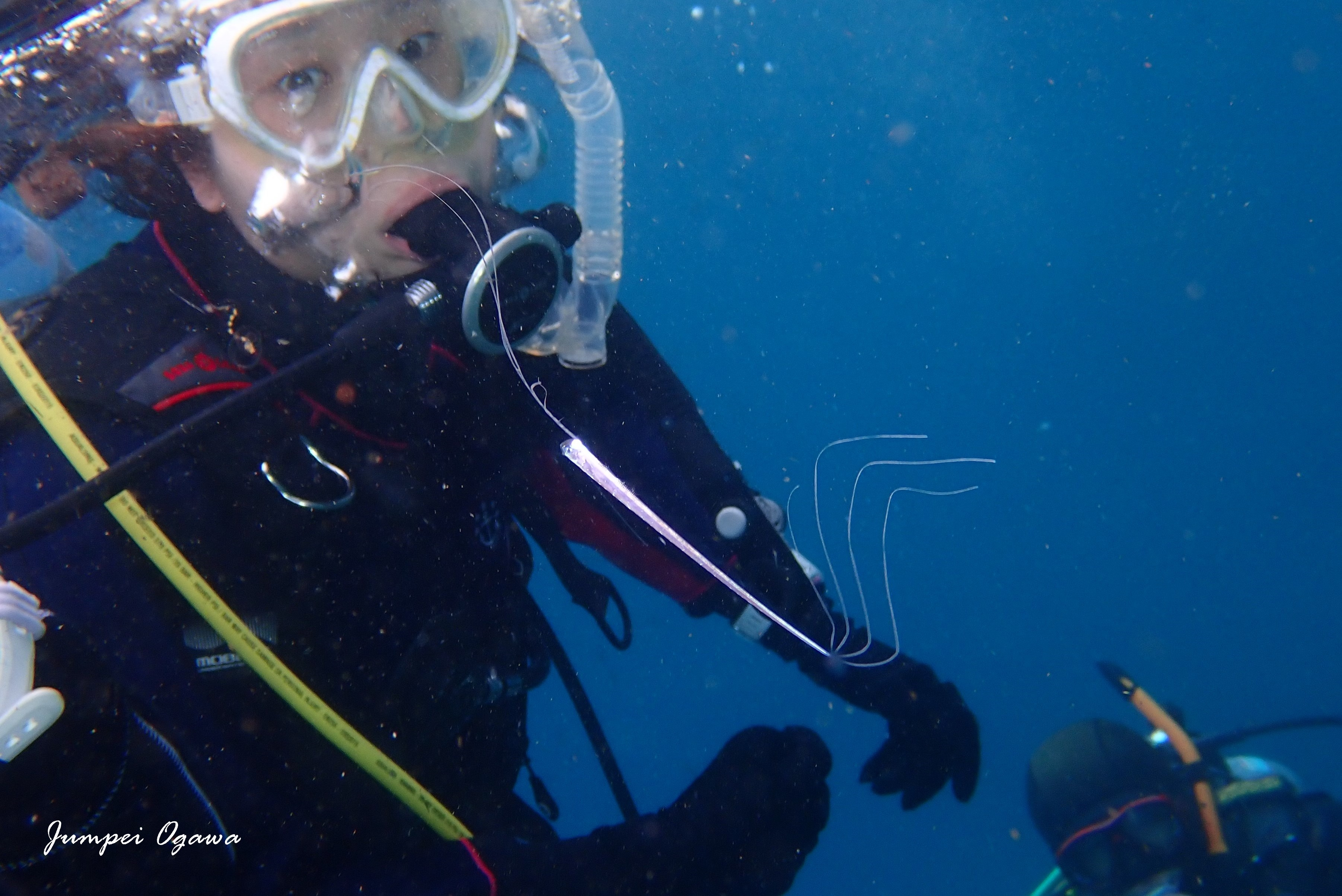 竜宮の使い,りゅうぐうのつかい,リュウグウノツカイ幼魚,リュウグウノツカイダイビング (8)